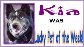 Lucky Pet of the Week